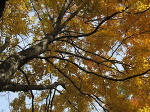 Fall2008