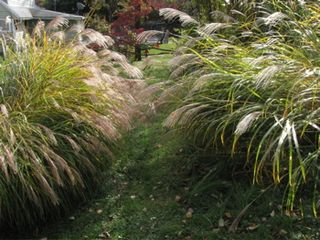 Tall-grasses-in-fall