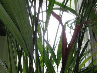 Palmbuddy