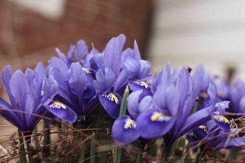 Mini iris2