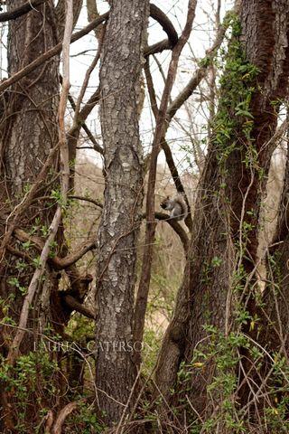 SquirrelBrain