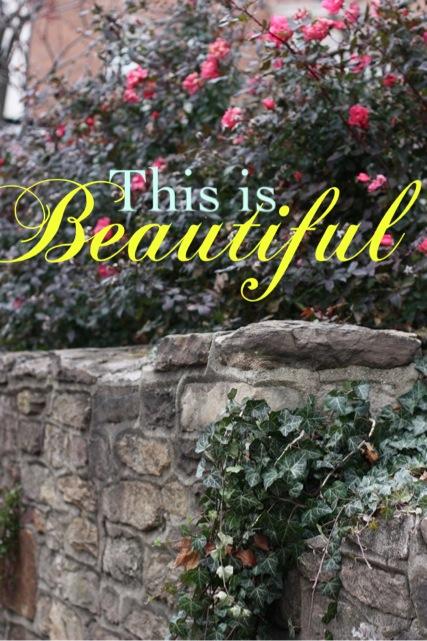 Roses:beautiful