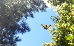 Butterfliestotherescue