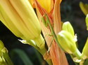 Prayingmantis_4
